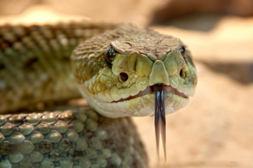 What Does a Dream About Snakes Mean?